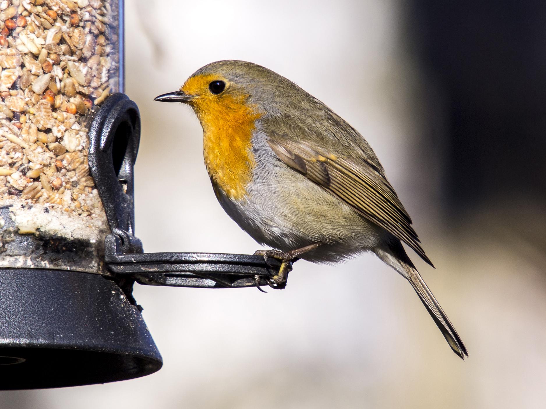 Der Nabu Hildesheim Ladt Ein Zur Gemeinsamen Vogelzahlung Am 6